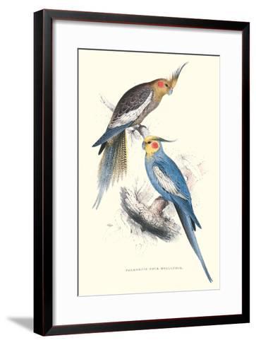 New Holland Parakeets -Nynphicus Hollandicus-Edward Lear-Framed Art Print