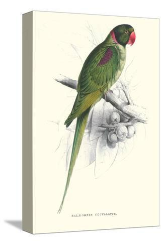 Footed Parakeet - Psittacula Eupatria-Edward Lear-Stretched Canvas Print