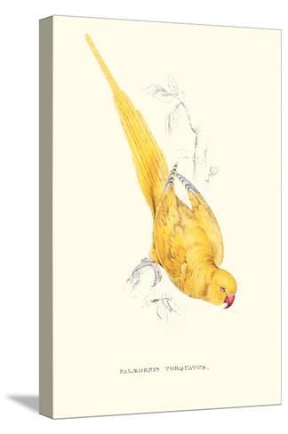 Rose Ringed Parrot (Yellow) - Psittacula Krameri-Edward Lear-Stretched Canvas Print