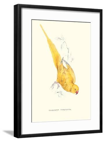 Rose Ringed Parrot (Yellow) - Psittacula Krameri-Edward Lear-Framed Art Print