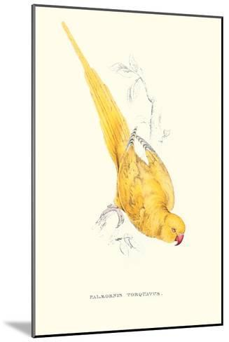 Rose Ringed Parrot (Yellow) - Psittacula Krameri-Edward Lear-Mounted Art Print