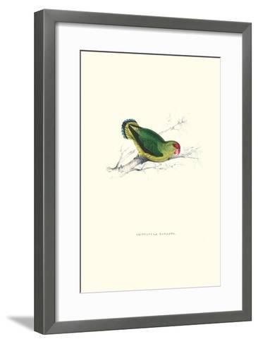 Abyssinian Parakeet - Agapornis Taranta-Edward Lear-Framed Art Print