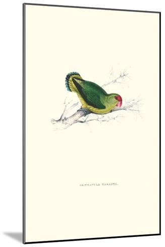 Abyssinian Parakeet - Agapornis Taranta-Edward Lear-Mounted Art Print