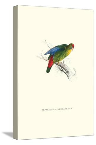 Red-Fronted Parakeet - Loriculus Philippinensis-Edward Lear-Stretched Canvas Print
