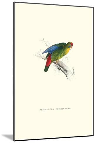 Red-Fronted Parakeet - Loriculus Philippinensis-Edward Lear-Mounted Art Print