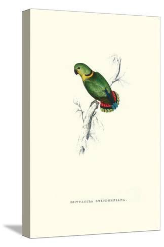 Swindern's Parakeet - Agapornis Swindernianus-Edward Lear-Stretched Canvas Print
