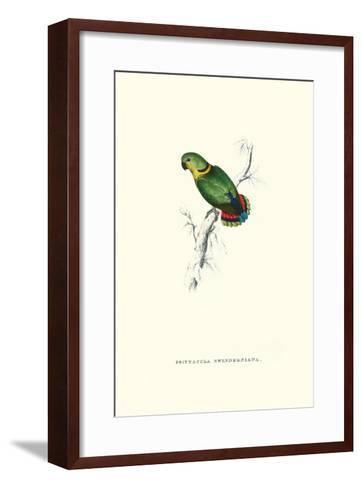 Swindern's Parakeet - Agapornis Swindernianus-Edward Lear-Framed Art Print