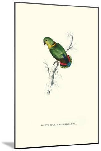 Swindern's Parakeet - Agapornis Swindernianus-Edward Lear-Mounted Art Print