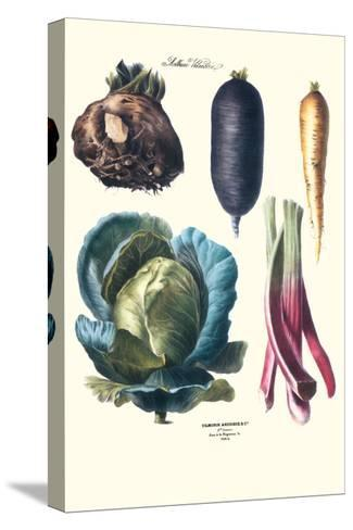 Vegetables; Rhubard, Tubers, and Cabbage-Philippe-Victoire Leveque de Vilmorin-Stretched Canvas Print
