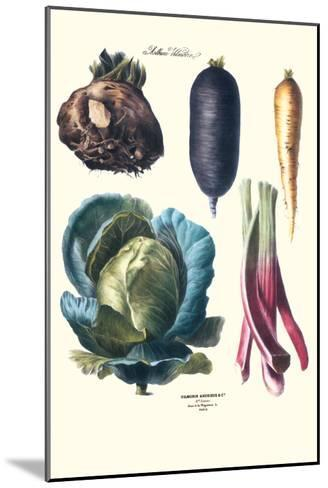 Vegetables; Rhubard, Tubers, and Cabbage-Philippe-Victoire Leveque de Vilmorin-Mounted Art Print