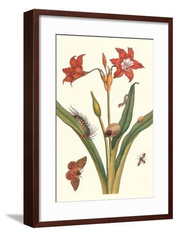 Nocturnal Moth Caterpillar on a Barbados Lilly and a Coreidae Bug-Maria Sibylla Merian-Framed Art Print