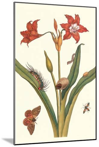 Nocturnal Moth Caterpillar on a Barbados Lilly and a Coreidae Bug-Maria Sibylla Merian-Mounted Art Print