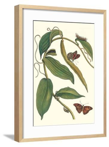 Flat-Leaved Vanila Plant with a Gulf Fritillary-Maria Sibylla Merian-Framed Art Print
