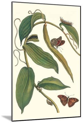 Flat-Leaved Vanila Plant with a Gulf Fritillary-Maria Sibylla Merian-Mounted Art Print