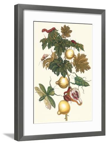 Nipple Fruit with a Leaf Mantus-Maria Sibylla Merian-Framed Art Print