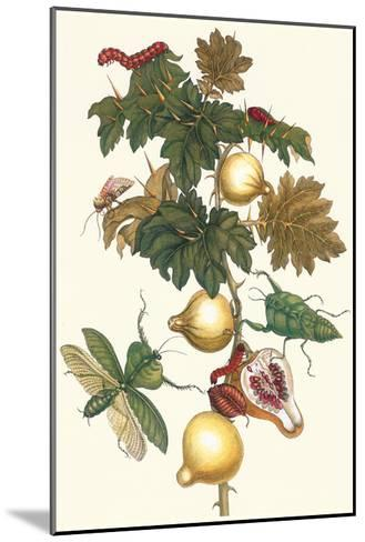 Nipple Fruit with a Leaf Mantus-Maria Sibylla Merian-Mounted Art Print