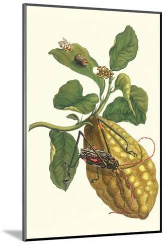 Citron with Monkey Slug and a Harlequin Beetle-Maria Sibylla Merian-Mounted Art Print