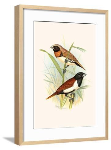 Chestnut Breasted Finch and Three Colored Mannikin-F^w^ Frohawk-Framed Art Print