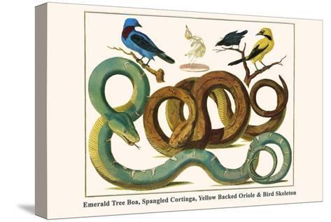 Emerald Tree Boa, Spangled Cortinga, Yellow Backed Oriole and Bird Skeleton-Albertus Seba-Stretched Canvas Print