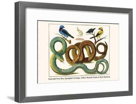 Emerald Tree Boa, Spangled Cortinga, Yellow Backed Oriole and Bird Skeleton-Albertus Seba-Framed Art Print