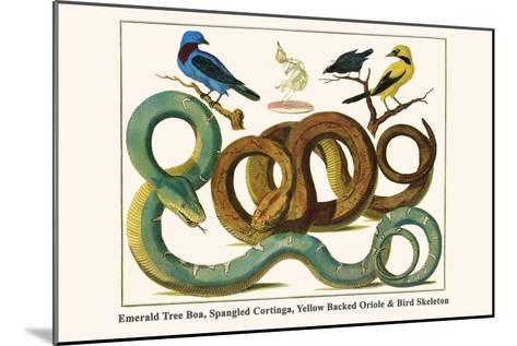 Emerald Tree Boa, Spangled Cortinga, Yellow Backed Oriole and Bird Skeleton-Albertus Seba-Mounted Art Print