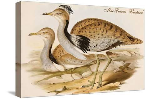 Macqueens Bustard-John Gould-Stretched Canvas Print