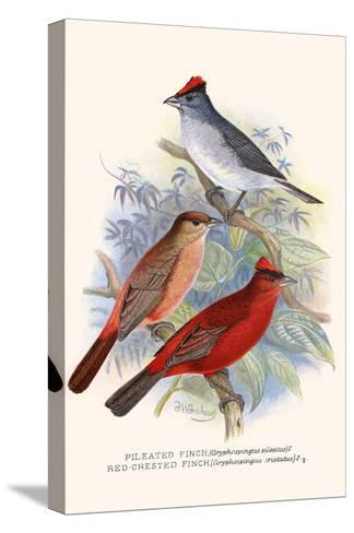 Pileated Finch and Red Crested Finch-F^w^ Frohawk-Stretched Canvas Print