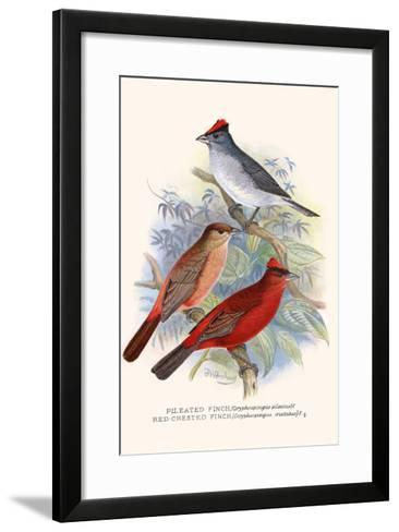 Pileated Finch and Red Crested Finch-F^w^ Frohawk-Framed Art Print