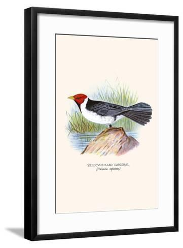 Yellow Billed Cardinal, Brown Throated or Lesser Cardinal-F^w^ Frohawk-Framed Art Print
