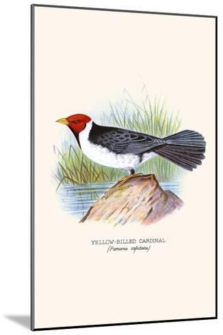 Yellow Billed Cardinal, Brown Throated or Lesser Cardinal-F^w^ Frohawk-Mounted Art Print