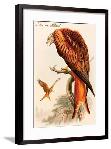 Kite or Glead-John Gould-Framed Art Print