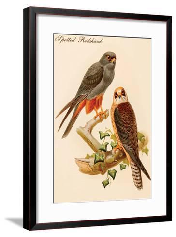 Spotted Redshank-John Gould-Framed Art Print