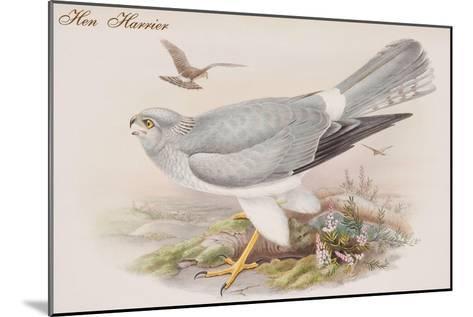 Hen Harrier-John Gould-Mounted Art Print