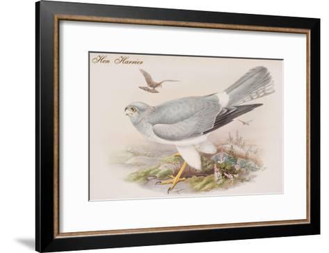 Hen Harrier-John Gould-Framed Art Print
