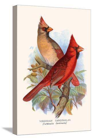 Virginian Cardinal-F^w^ Frohawk-Stretched Canvas Print
