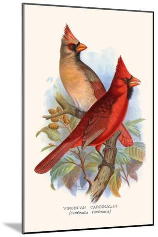 Virginian Cardinal-F^w^ Frohawk-Mounted Art Print