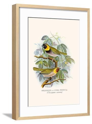 Melodius or Cuba Finch-F^w^ Frohawk-Framed Art Print