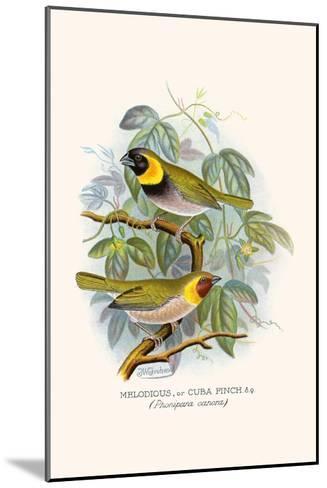 Melodius or Cuba Finch-F^w^ Frohawk-Mounted Art Print