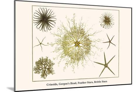 Crinoids, Gorgon's Head, Feather Stars, Brittle Stars-Albertus Seba-Mounted Art Print