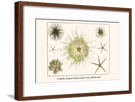 Crinoids, Gorgon's Head, Feather Stars, Brittle Stars-Albertus Seba-Framed Art Print