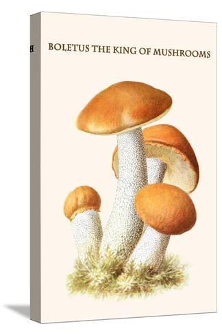Boletus the King of Mushrooms-Edmund Michael-Stretched Canvas Print
