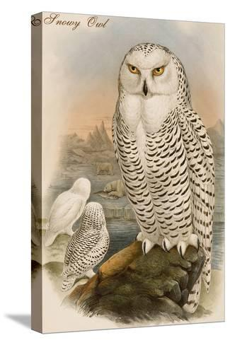 Snowy Owl-John Gould-Stretched Canvas Print