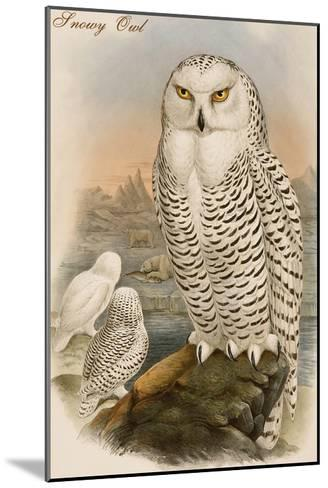 Snowy Owl-John Gould-Mounted Art Print