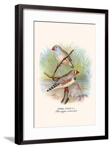 Zebra Finch-F^w^ Frohawk-Framed Art Print