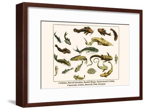 Catfishes, Barred Sorubim, Banded Banjo, Suckermouth Catfish, Cascarudo, Gobies, etc.-Albertus Seba-Framed Art Print