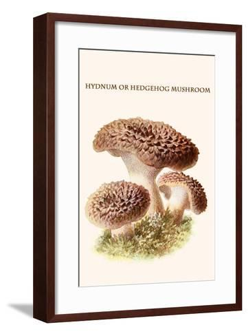 Hydnum or Hedgehog Mushroom-Edmund Michael-Framed Art Print