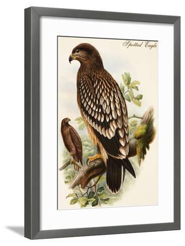 Spotted Eagle-John Gould-Framed Art Print