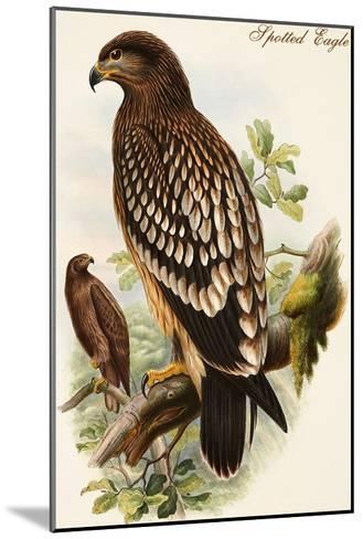 Spotted Eagle-John Gould-Mounted Art Print