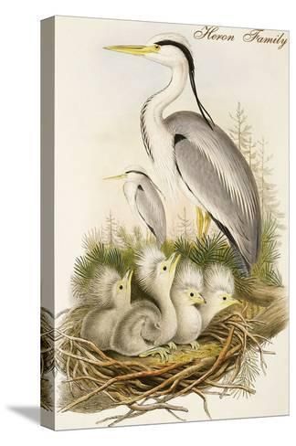 Heron Family-John Gould-Stretched Canvas Print