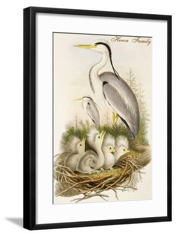 Heron Family-John Gould-Framed Art Print